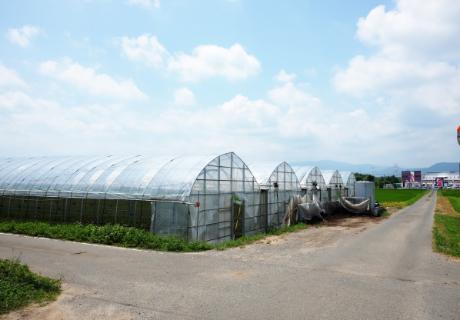 安心・安全な有機農法